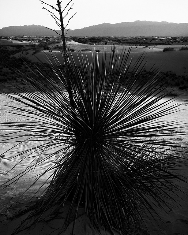 http://www.richardsprengeler.com/yucca-white-sands-national-monument-new-mexico/