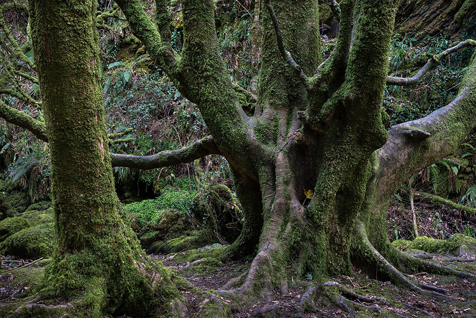 http://www.richardsprengeler.com/forest-killarney-national-park-2/