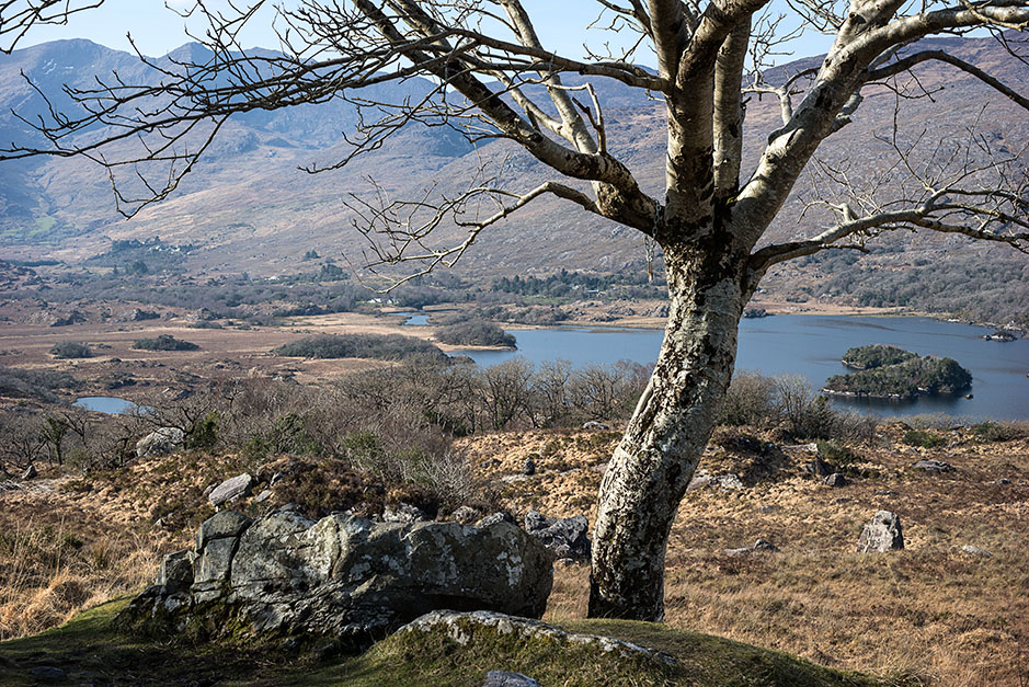 http://www.richardsprengeler.com/upper-lake-killarney-national-park-2/
