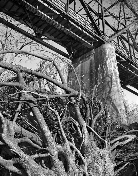 /product//chain-of-rocks-bridge-uprooted-tree-from-the-east-bank-of-the-mississippi-river-winter-2020/