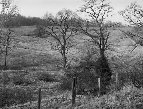 Pasture Near Freeburg, Illinois, 1983