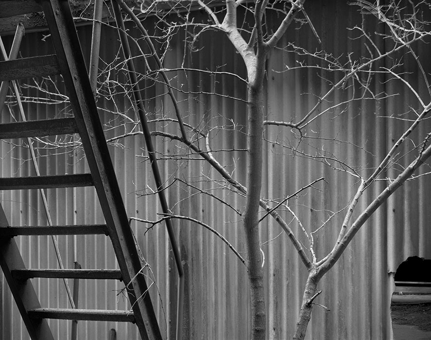 /product//tree-steps-national-city-power-plant-2005/